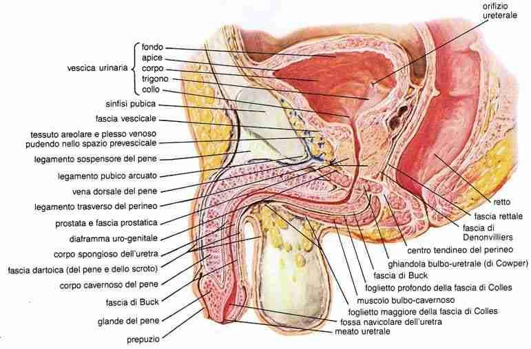prostata - carcinoma prostatico